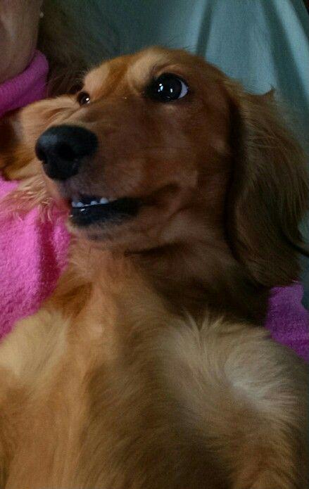 Pixie...my girl
