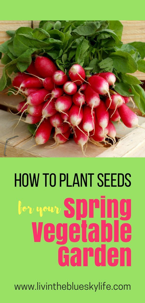 How To Start Seeds For Your Early Spring Vegetable Garden 400 x 300