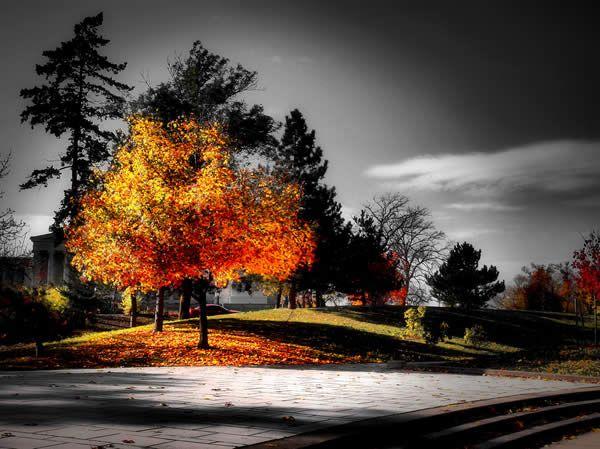 Fall: Selective Coloring