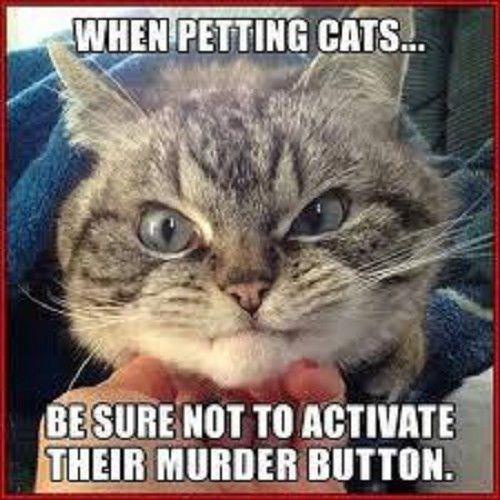 Funny Cat  Refrigerator magnet