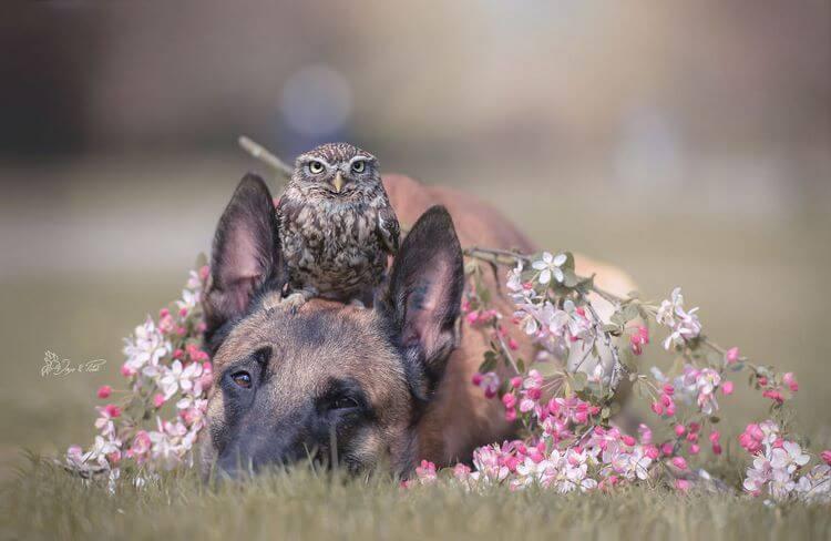 Эти 30 фотографий пса и его подруги совы просто светятся теплом in 2020