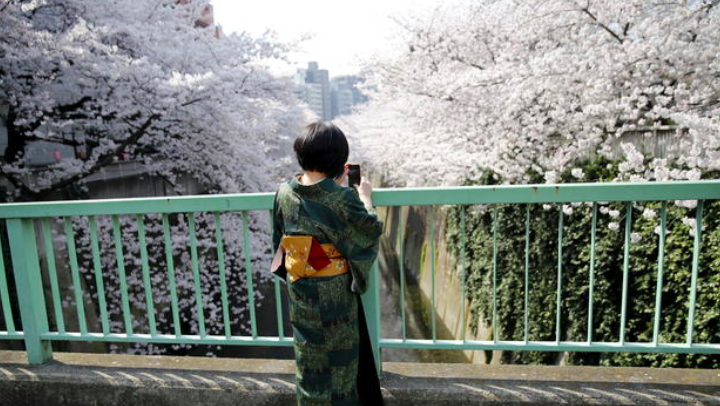PHOTOS: Cherry blossoms are in full bloom in Tokyo, Japan http://cbsn.ws/1H5EPCG