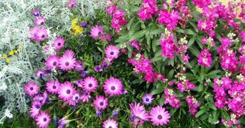 Blog para disfrutar de las flores silvestres y cultivadas de la