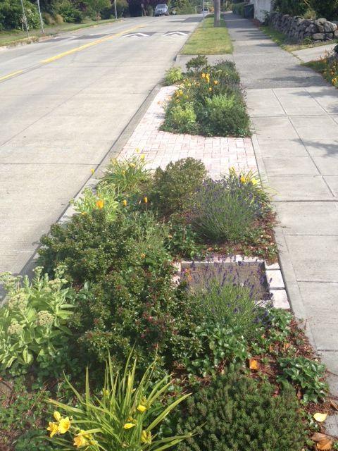 Parking Strip Landscape Seattle Front Yard Garden Lawn And Landscape Drought Tolerant Plants