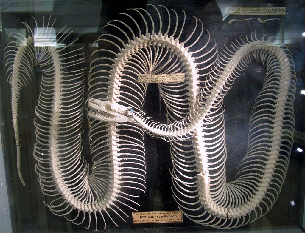 Resultado de imagem para skeleton Python