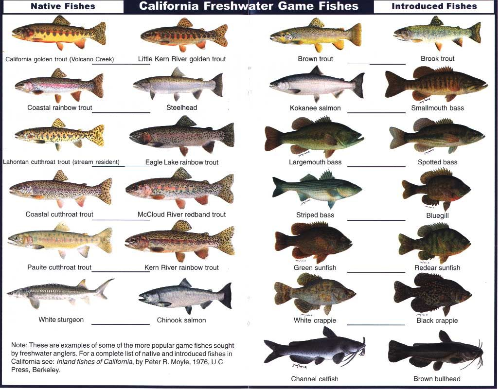 California freshwater game fish (notice the trout on top!) | Trout