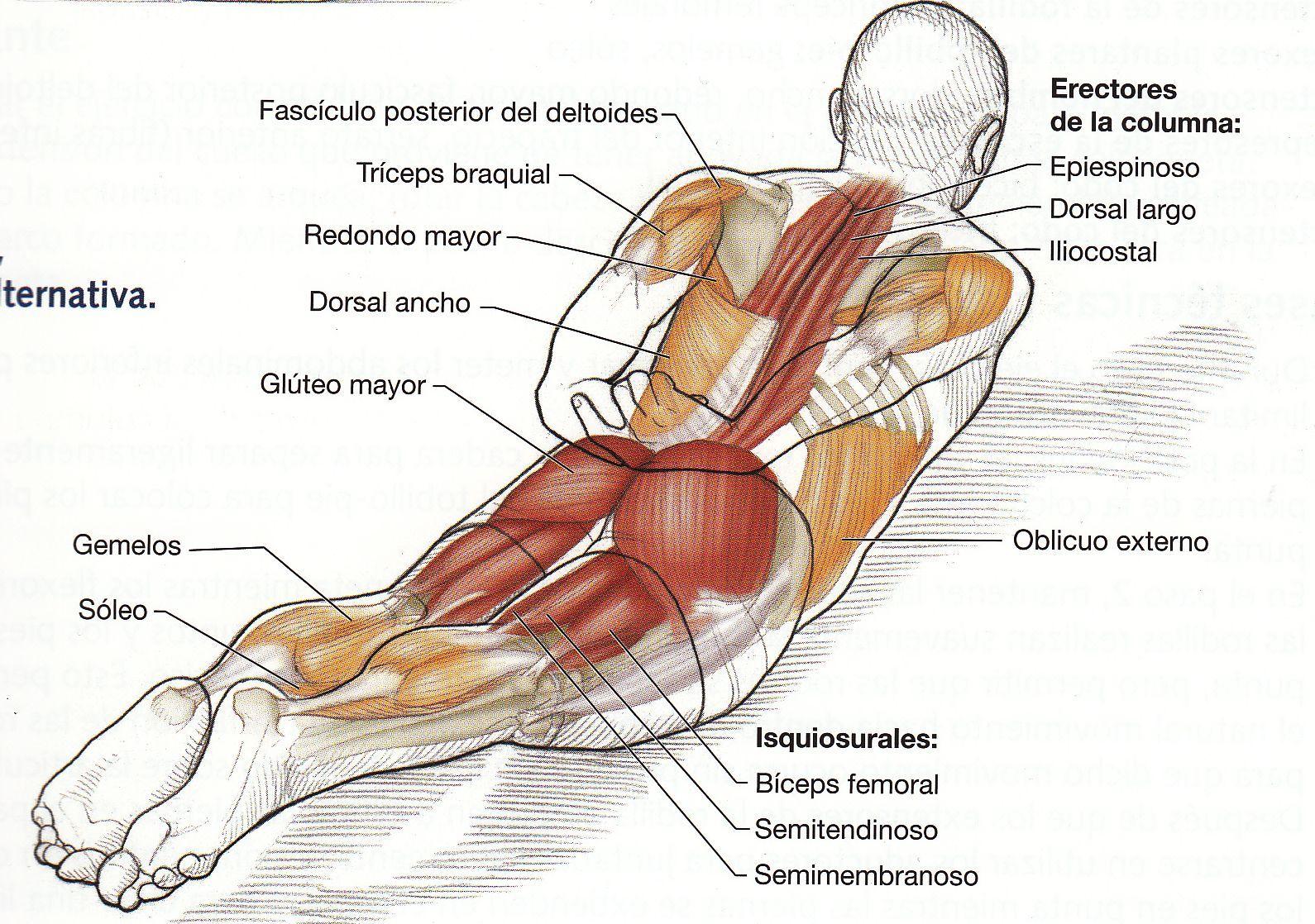 como.trabajar los diferentes musculos de los gluteos - Buscar con ...