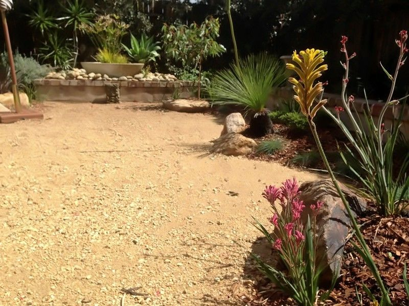 australian native garden landscape after modern native garden