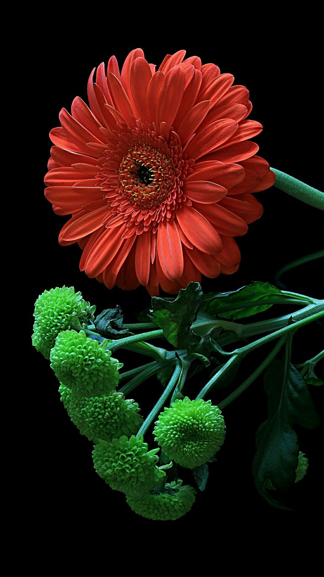 Pin By Galal Ahmad On Cvety Gerbera Flower Beautiful Flowers Special Flowers