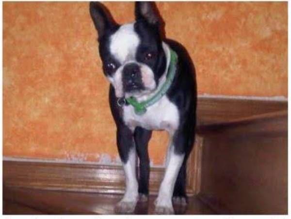 Lost Dog El Paso Texas Tx United States L35366 Losing A Dog
