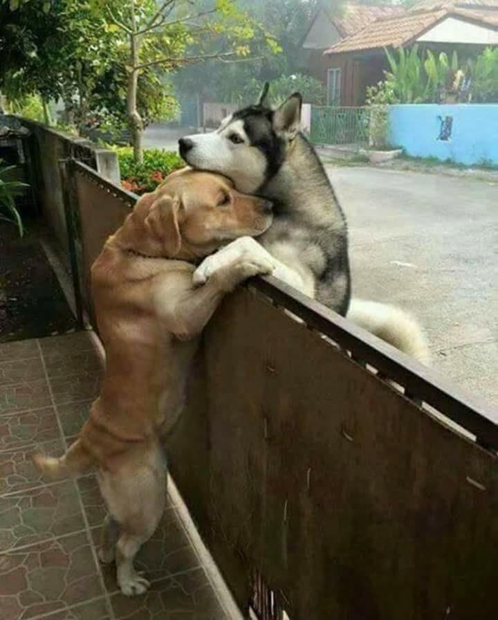 Wonderful Pet Anime Adorable Dog - 8398a93c2163370d8c0cb19d221fb6be  Graphic_708990  .jpg