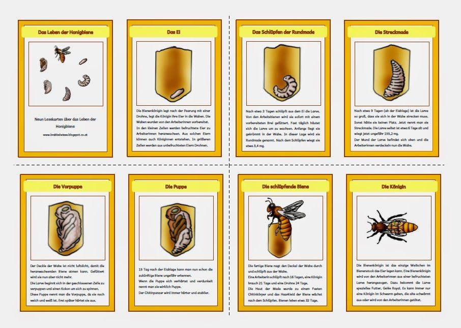 Biene Kindergarten Google Suche Biene Kindergarten School Und