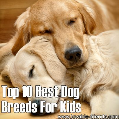 best small dog breeds for kids cute King charles