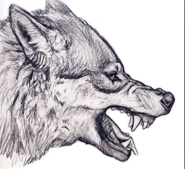 Detailed Angry Wolf Wolf Sketch Wolf Drawing Wolf Head Drawing