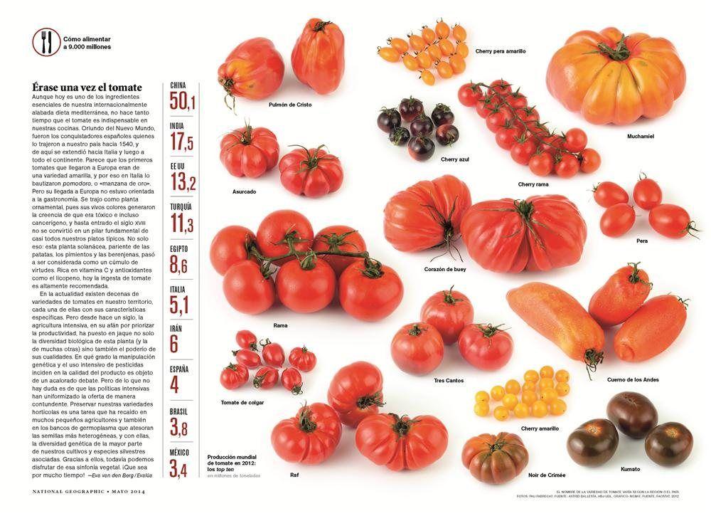 Tomates Tomate Recetas Dieta