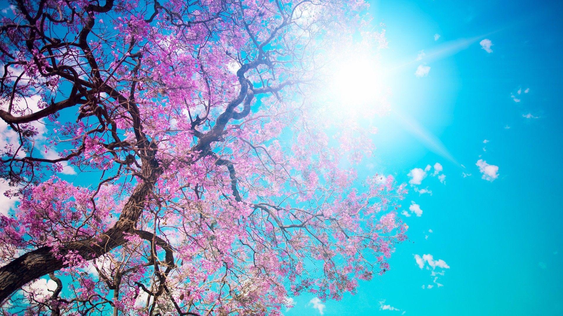خلفيات للكمبيوتر 2018 بجودة عالية Tecnologis Spring Desktop Wallpaper Spring Wallpaper Nature Wallpaper