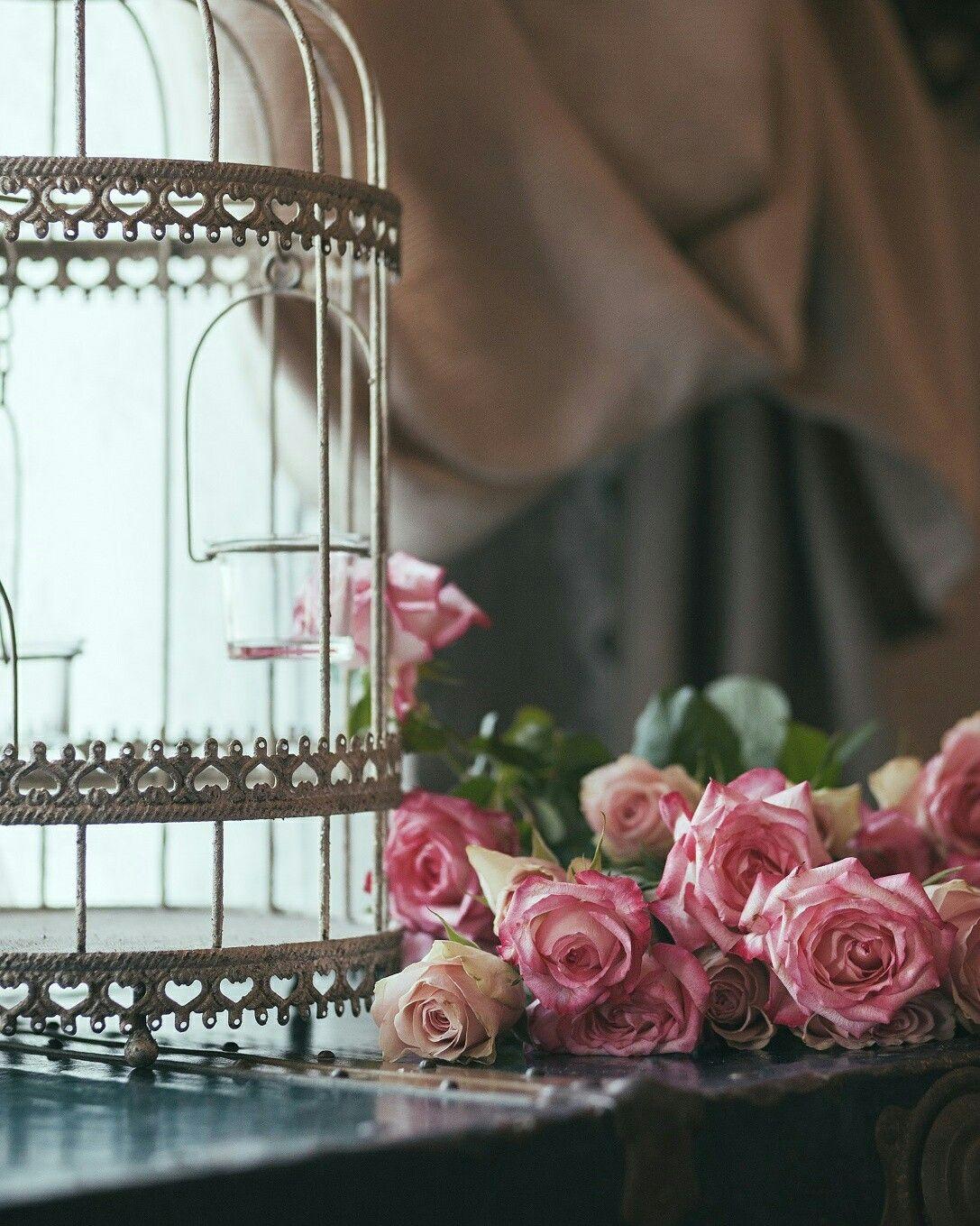 vintage, birdcage, romantic home, décor, roses, rosebelle