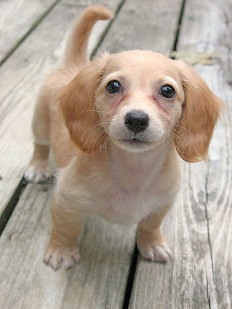 If I Look Cute Enough I Know You Will Give My Toy Back Cute Dogs Baby Dogs Puppies Funny