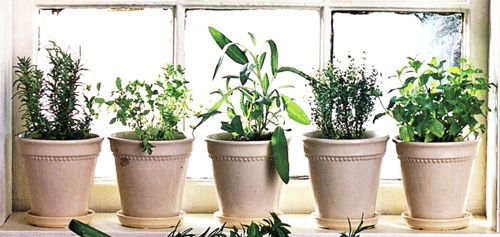 Indoor Herb Garden Winter Winter windowsill herb garden herbs indoors herbs and herbs garden 16125 potted herbs indoors arizona pottery workwithnaturefo