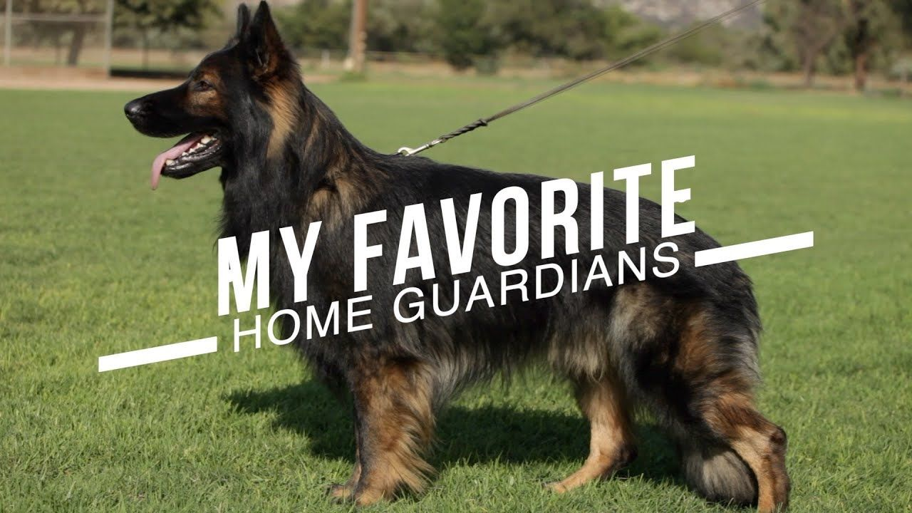 Best Dog Breeds For Home Protection No Training Necessary In 2020