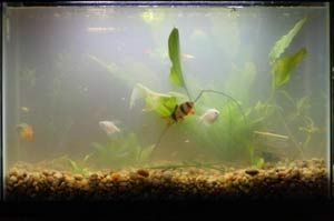 [+] Fish Tank Cloudy