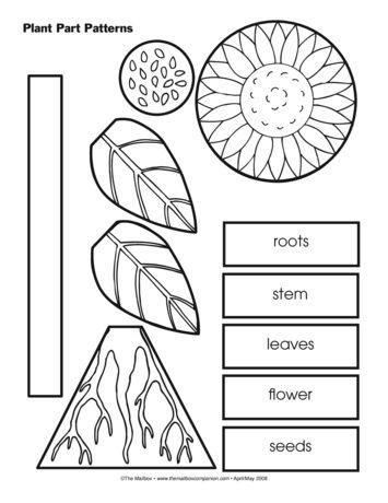 plant part patterns lesson plans the mailbox educaci n kindergarten science preschool. Black Bedroom Furniture Sets. Home Design Ideas