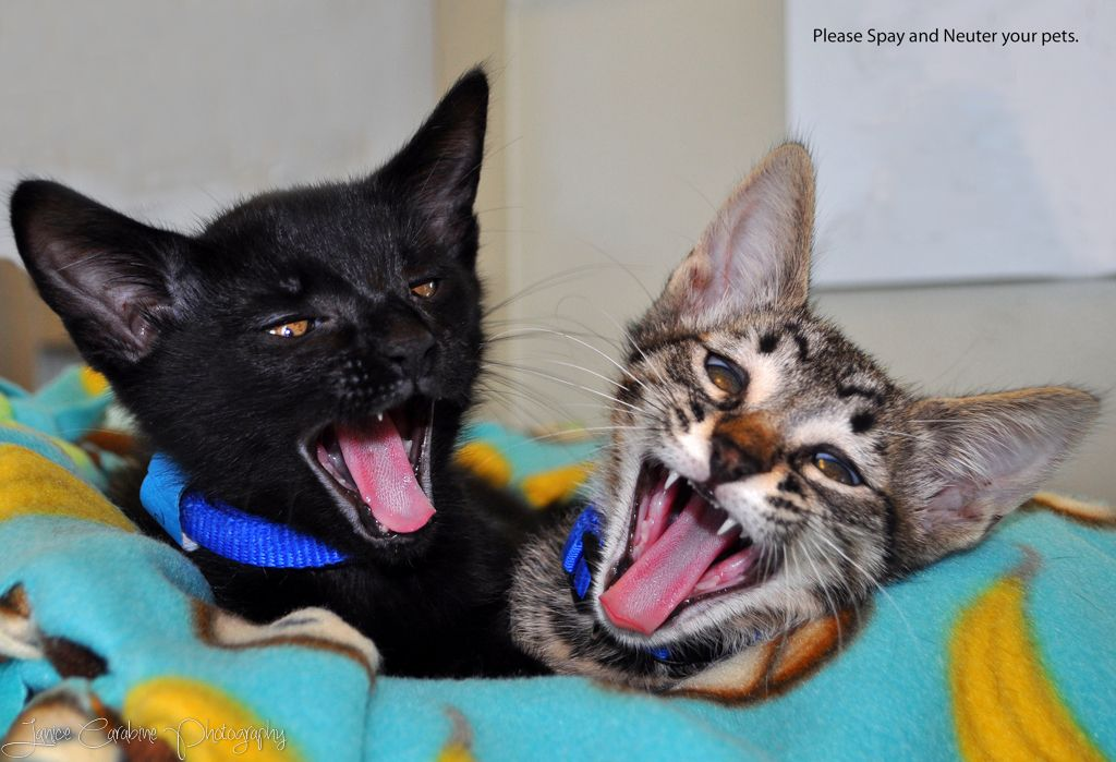 Spay and Neuiter Humane society, Animals friends, Animals