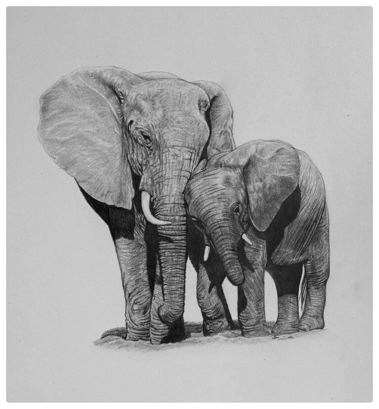 Elephant mother and ca...