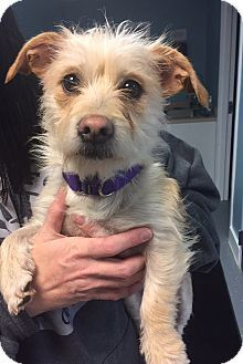 Bristol Ct Terrier Unknown Type Small Mix Meet Harriet A Dog For Adoption Http Www Adoptapet Com Pet 17520493 Bristol Conn Pets Dog Adoption Terrier