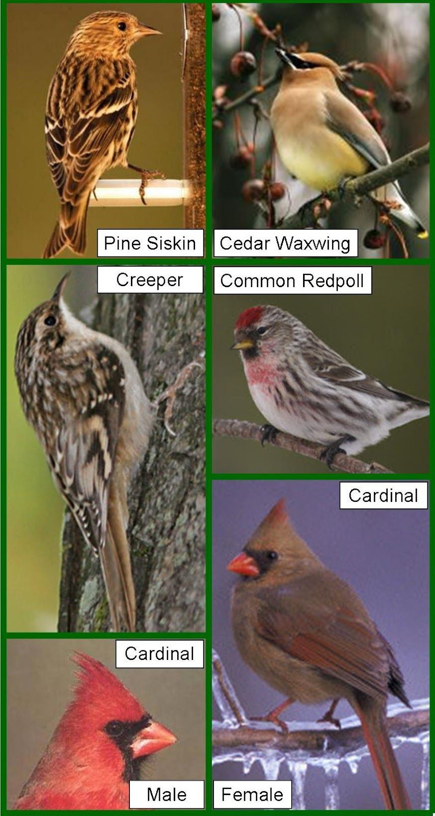 Michigan wild bird species wild birds unlimited earth michigan wild bird species wild birds unlimited publicscrutiny Gallery