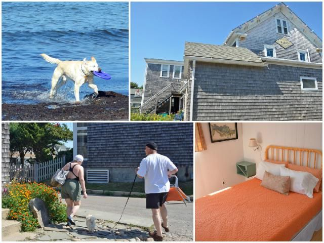 5 New England Places Dogs Love: #2 Dogs Dig the Island Vibes at the Darius Inn