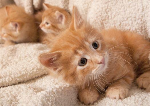 Photo Thinkstock Kitten Names Cute Cats Cute Animals