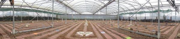Akasha aarde labyrint