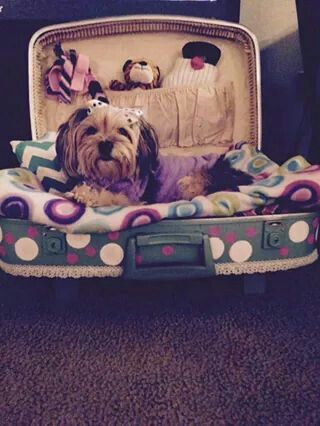 Vintage suitcase turned dog bed. A friend made this one for another one of my friends. To cute.