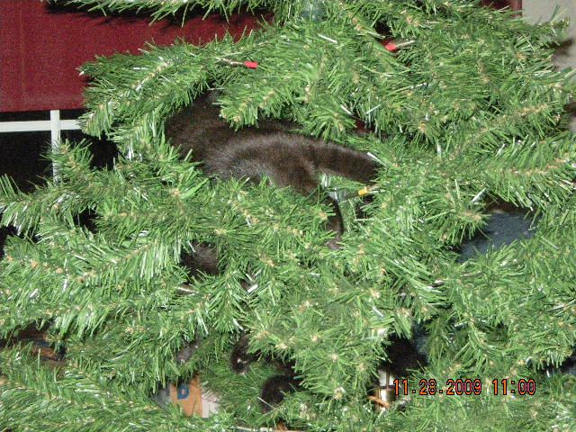 Tips to keep your cat off the Christmas Tree You've just