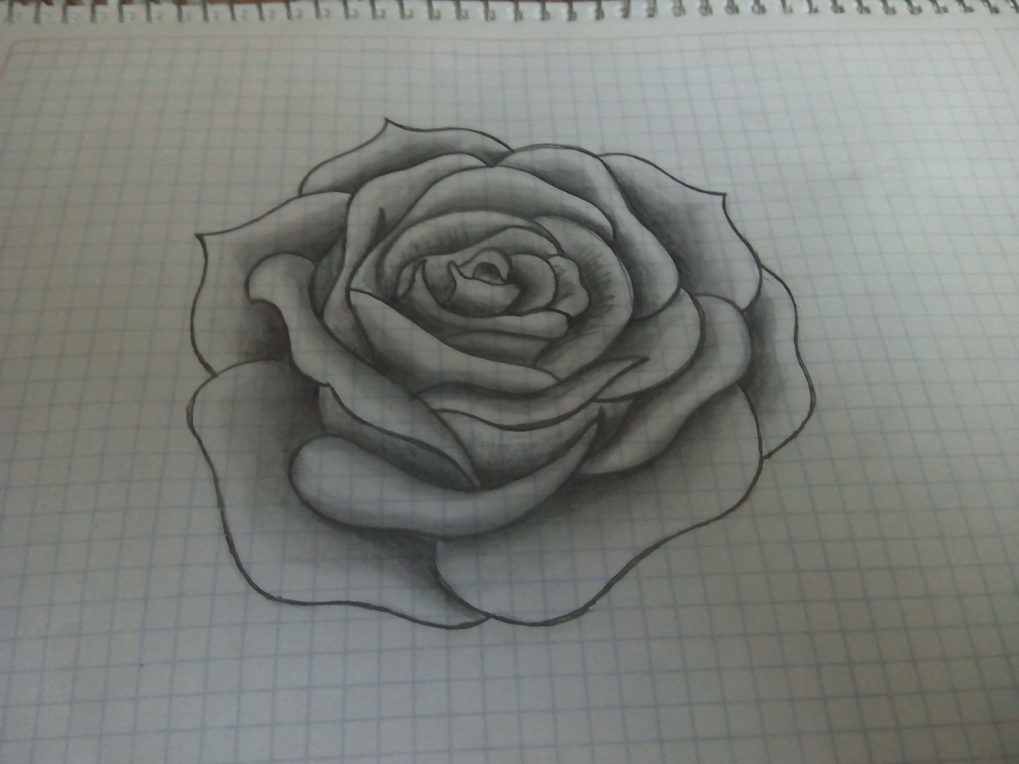 Rosa A Lapiz Dibujos