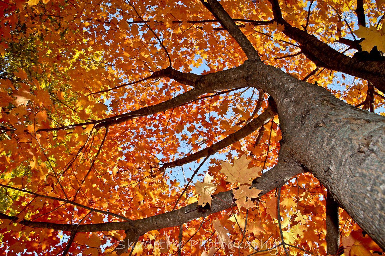trees photography - Buscar con Google
