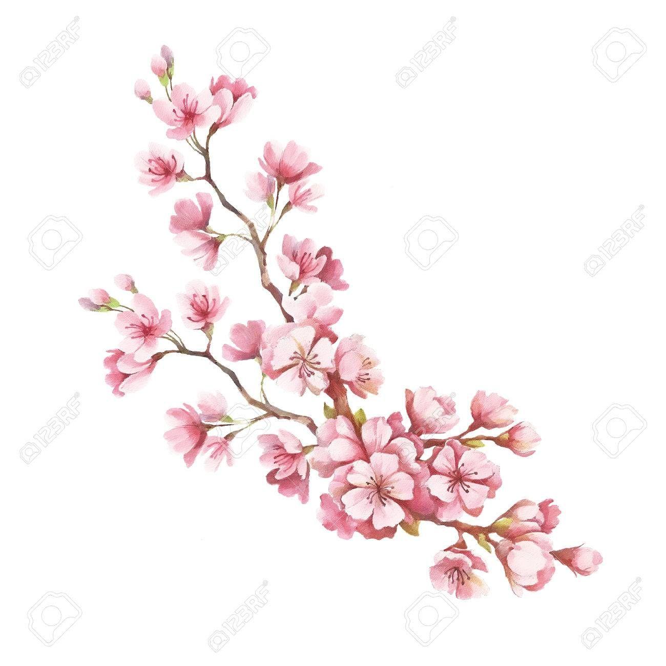 Dibujo Flores Cerezo Buscar Con Google Flor De Cerezo Flor De Cerezo Dibujo Cerezo