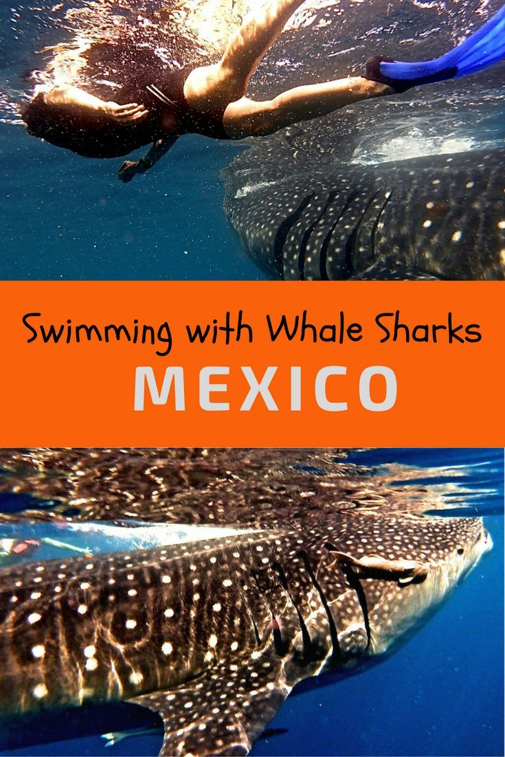 Enbarcadero picture of aquamarina beach hotel cancun tripadvisor - Tips For Snorkeling And Swimming With Whale Sharks In Cancun Mexico