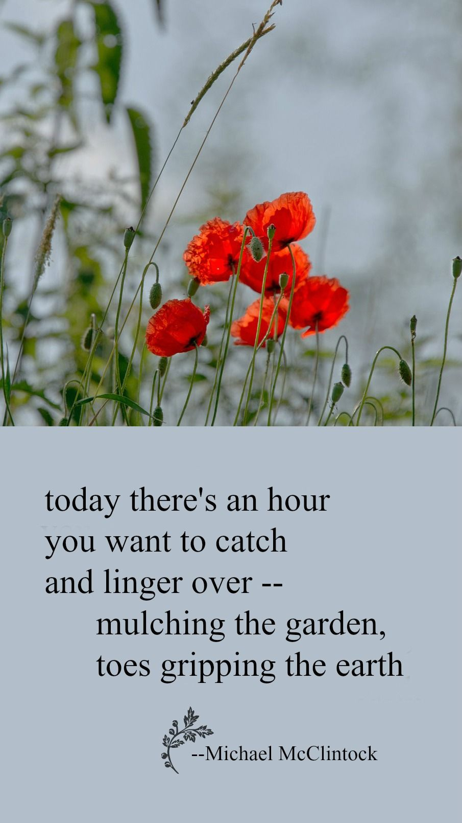 Tanka poem today there's an hour by Michael McClintock