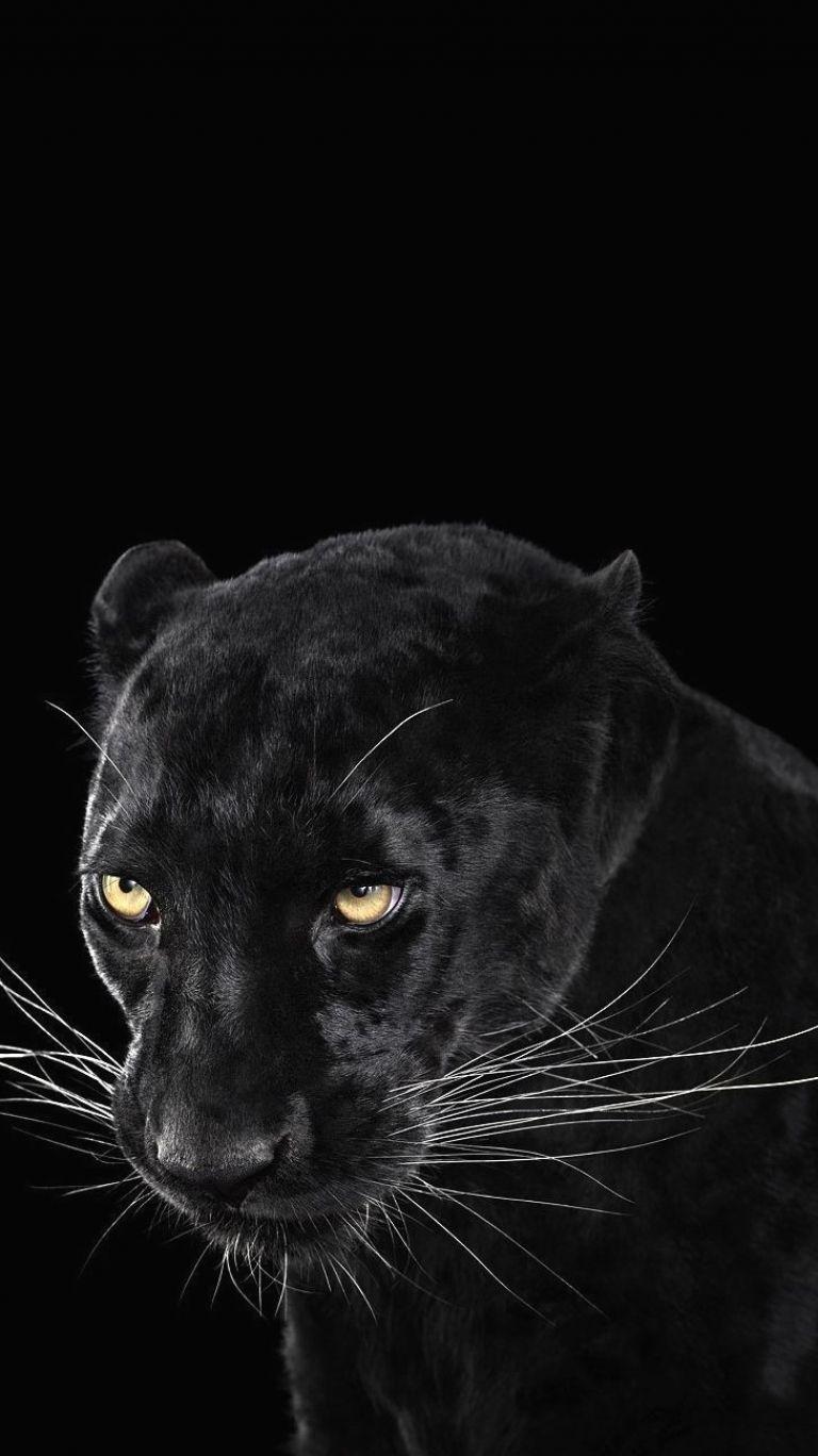 Anamalistic Funfreshfierce Black Jaguar Animal Black Panther Images Black Panther Animal