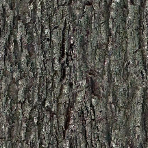 Tree Bark Tree Tree Bark Materials And Textures