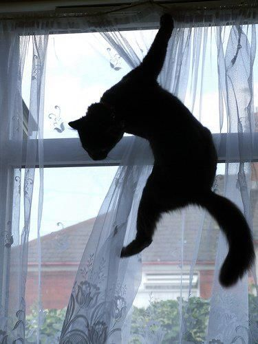 "=^,,^= ""Kittens and curtains.  One must choose which one loves most."" --Pam Brown"