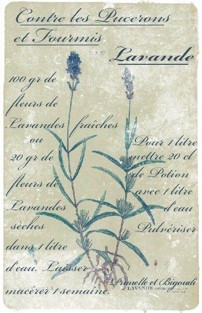 Carte à imprimer... Recette, contre les Pucerons du Jardin.... Prunelle et Bigoudi http://prunelle-et-bigoudi.fr/index-des-magies-contre-les-ptites-betes