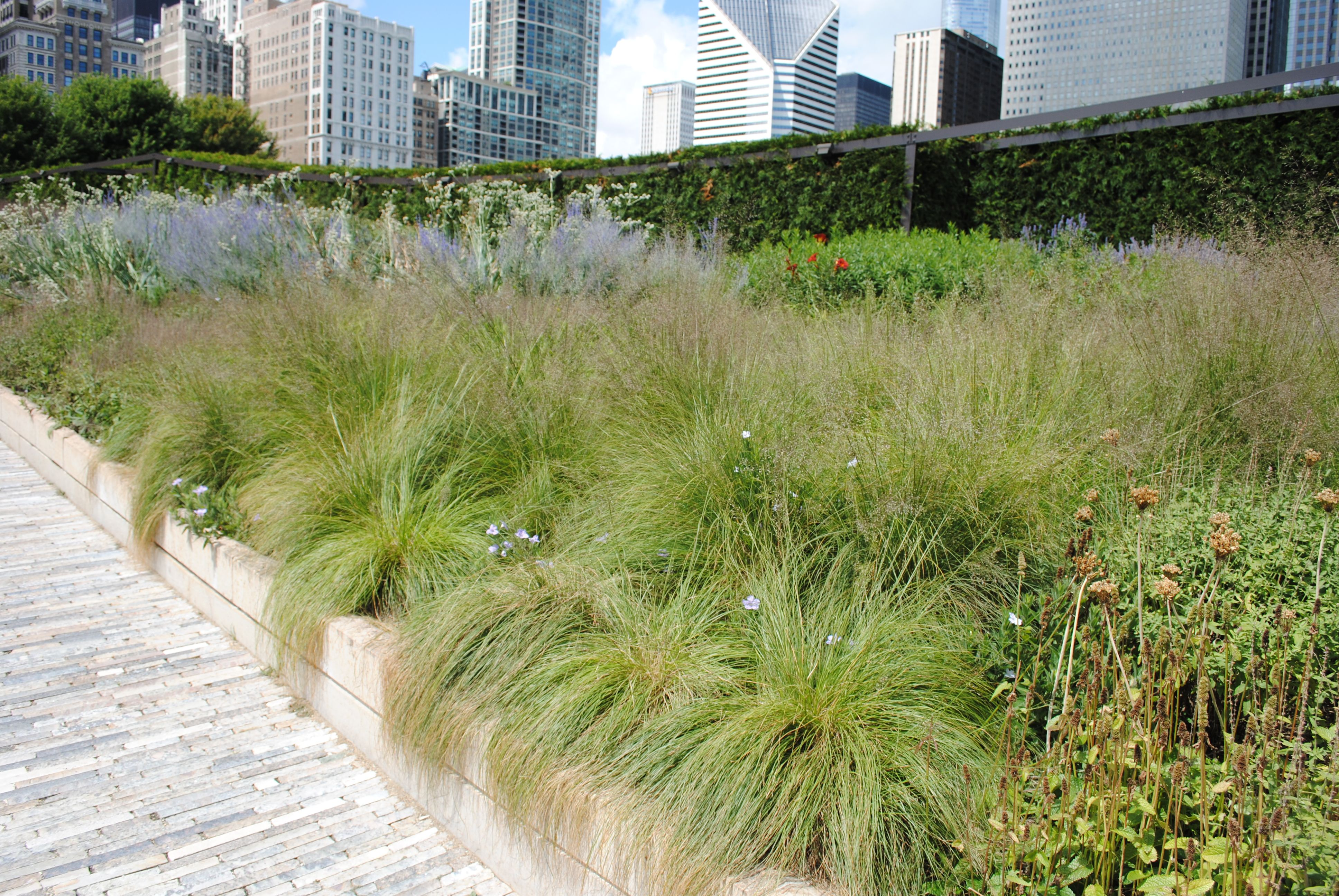 A good mass planting of the prairie dropseed grass for Mass planting grasses