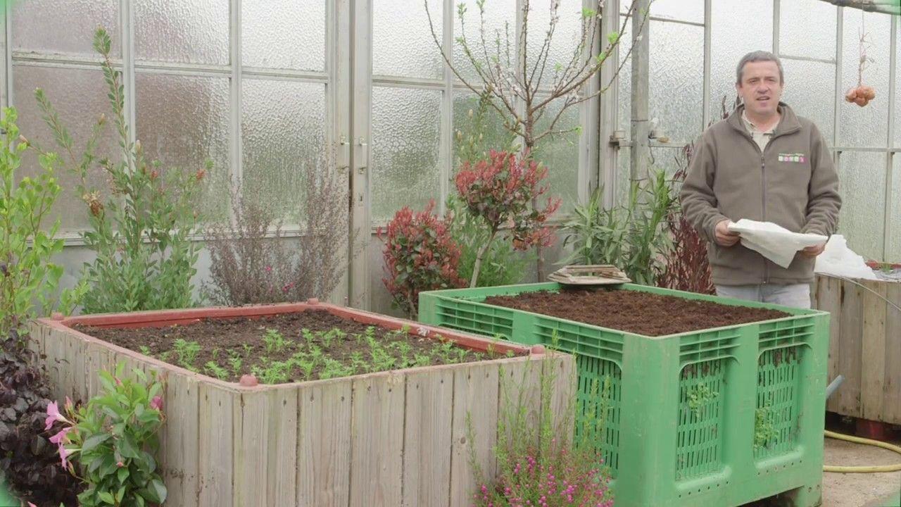 Comment Se Débarrasser Des Bambous Dans Le Jardin comment se débarrasser des limaces et escargots et lutter