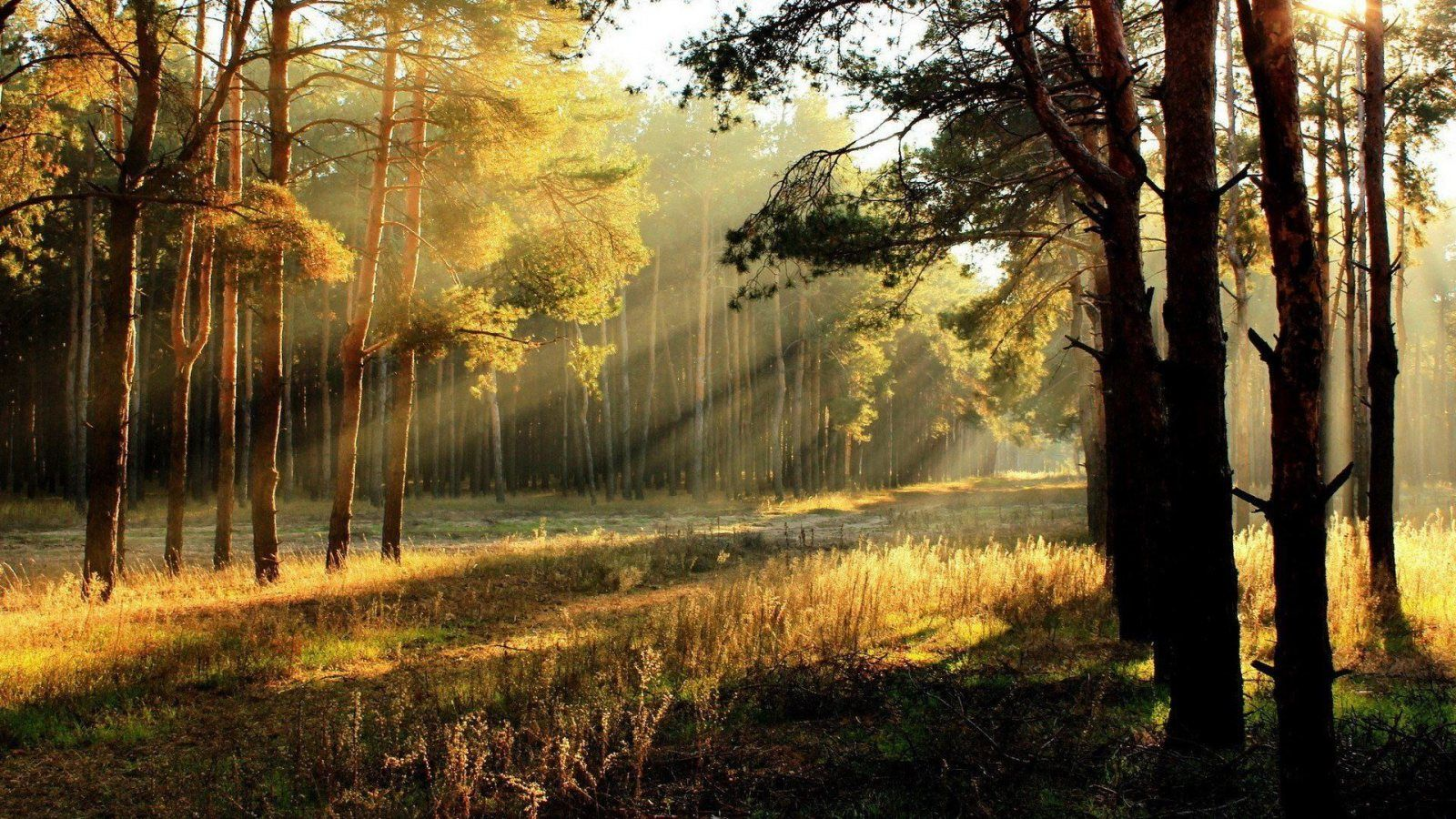 Sun Rays Through Forest Trees Hd Wallpaper Slwallpapers Sunrise Landscape Forest Landscape Autumn Landscape Wallpaper rays of light trees autumn