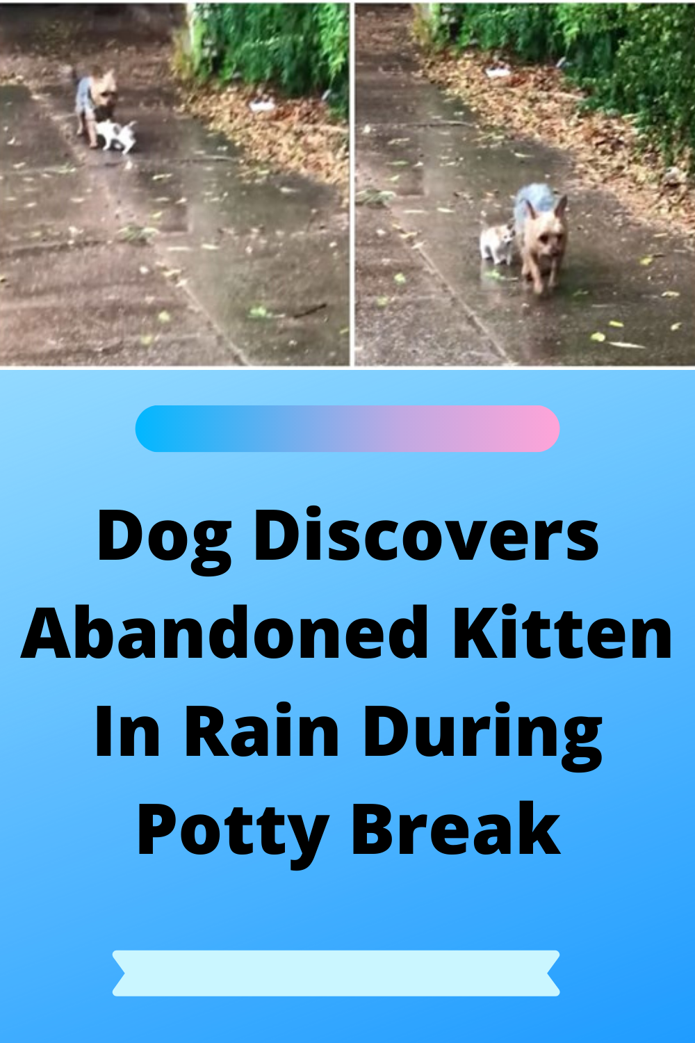 Does Your Dog Refuse To Go Potty In Regular Rain Much Less A Tropic Storm Level Of Rain And Water On The Ground In 2020 Indoor Dog Potty Dog Potty Patch