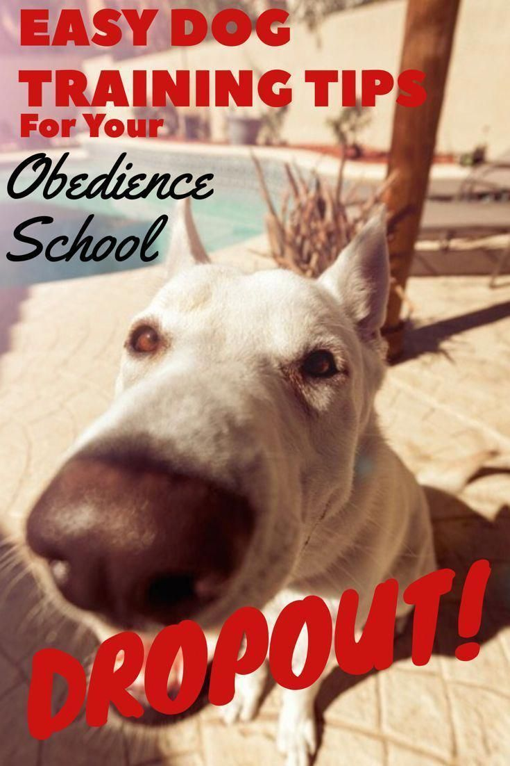 The Best Online Dog Training For Your Obedience School Dropout