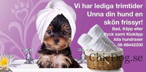 HUNDKLÄDER & ACCESSOARER hos ChicDog.se